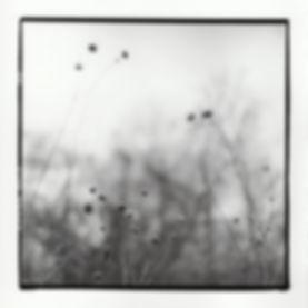 """""""Leaf,"""" Silver Gelatin Print, 2017"""
