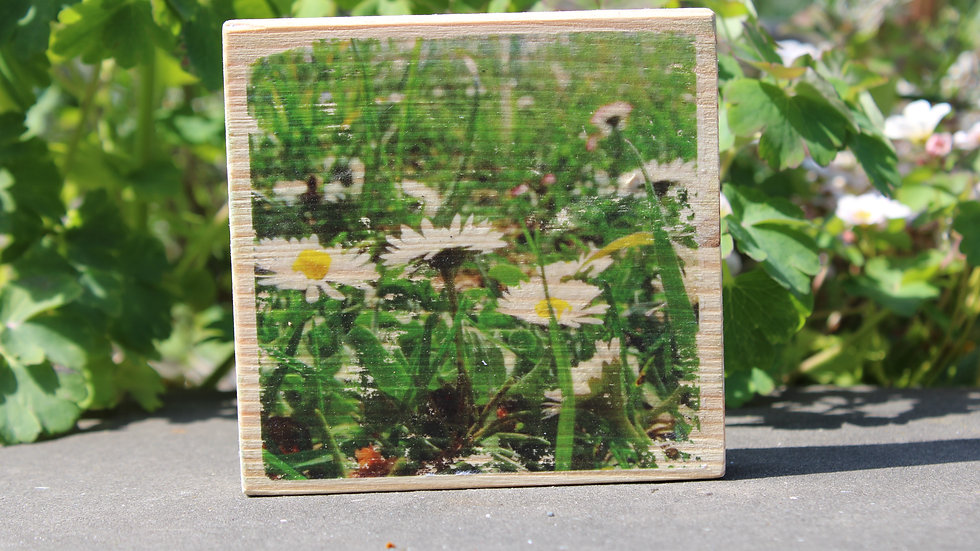 Holzbild Gänseblüamle