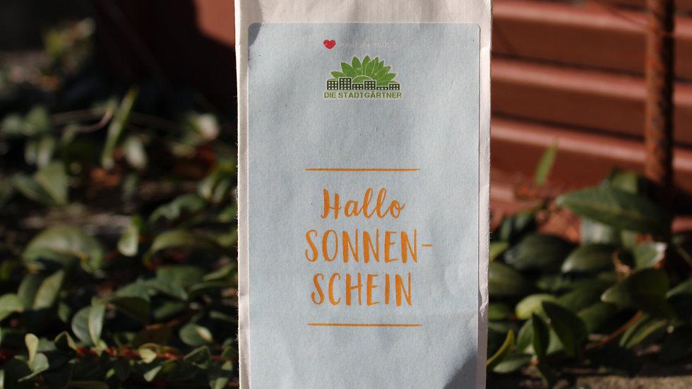 """Seedbombs """"Hallo Sonnenschein"""""""