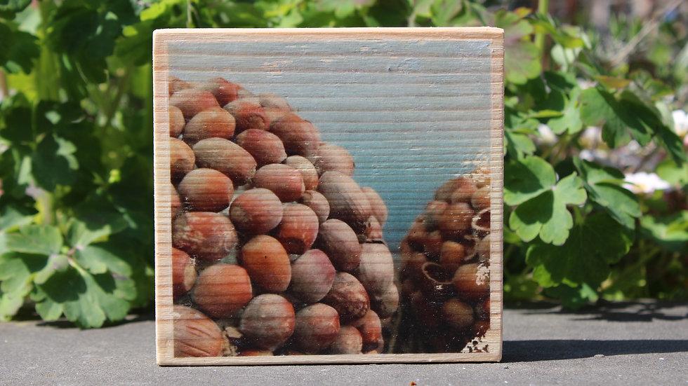 Holzbild Haselnusskugel
