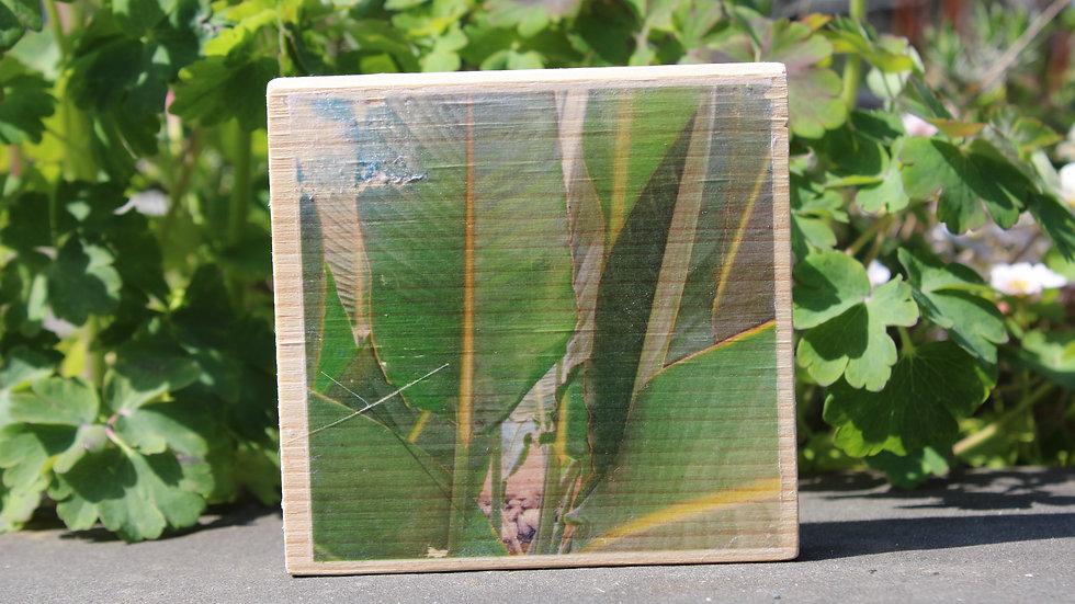 Holzbild Strelizienblätter