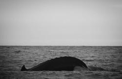 Sesión ballena