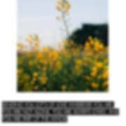 Screen Shot 2020-04-08 at 11.54.35 AM.pn