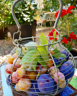 Trois couleurs de prunes....prunes d'Ent
