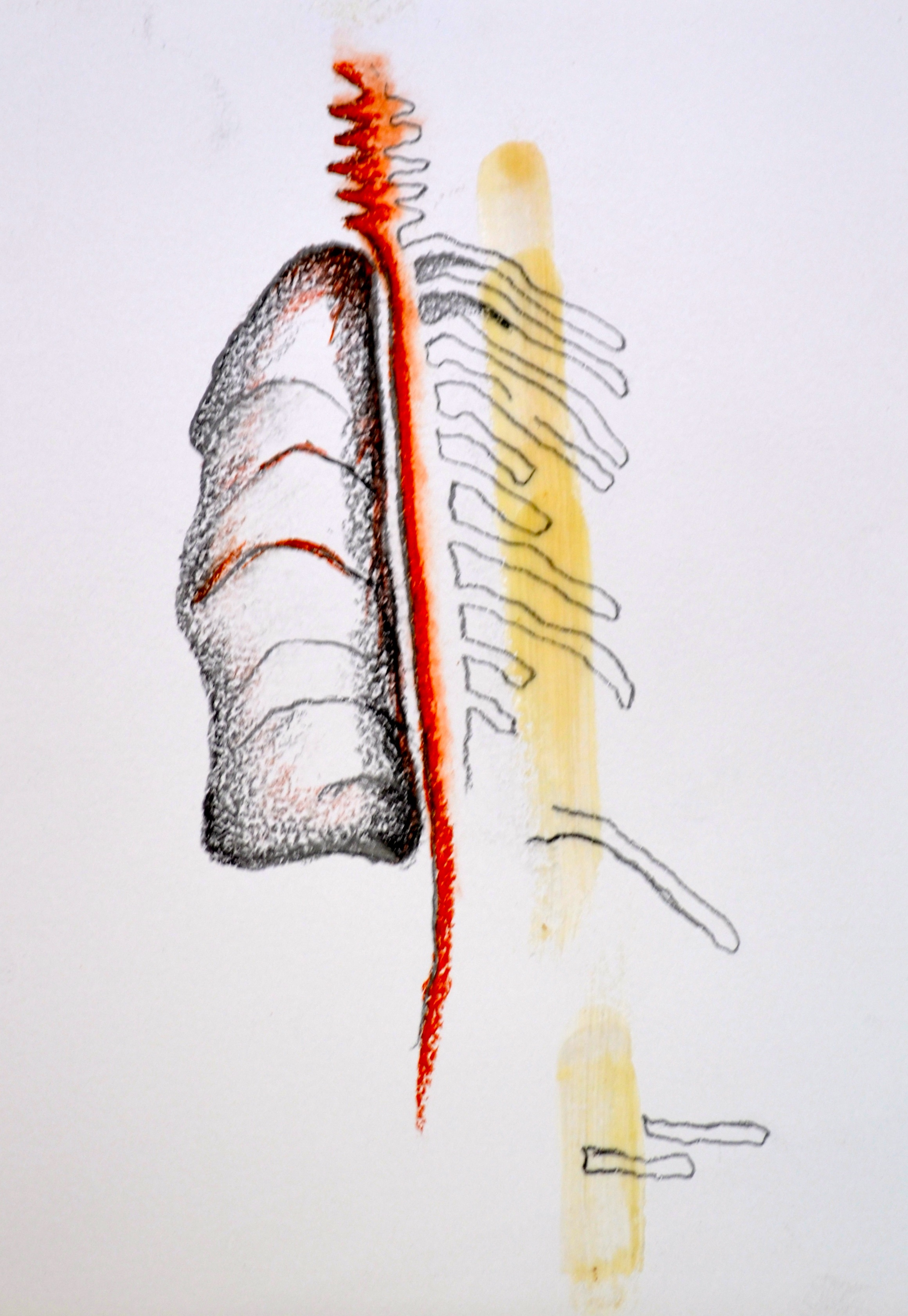 anatomia de alas rotas