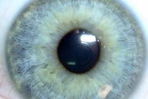 La diététique pour la santé des yeux