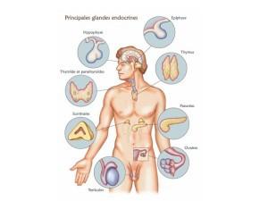 Endocrino-Psychologie : Premiers pas (Partie 1)