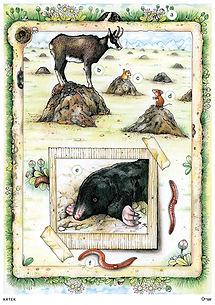 """Didaktické karty ke knize """"Příběhy ze staré zahrady"""". Vydalo Nakladatelství Klíč"""