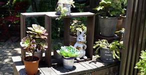 ガーデン雑貨専門サイト開設