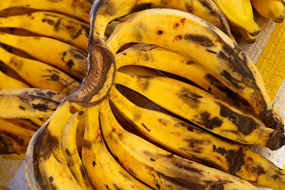 Banana da Terra Orgânica - aprox 1,5kg
