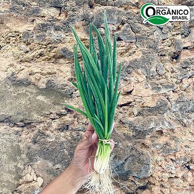 Cebolinha/Cebolão Orgânica - Un