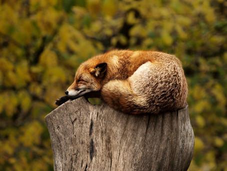 Briser le cycle de l'insomnie avec l'hypnose