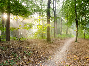 dry-leaves-forest-hd-wallpaper-41102.jpg