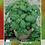 Thumbnail: Albahaca Grande Verde