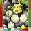 Thumbnail: Tomate Morado Jasper