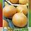 Thumbnail: Cebolla Amarilla