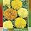 Thumbnail: Cempasúchil Grande Doble Variado Rosa De Las Indias