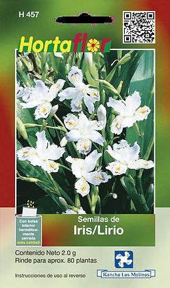 Iris - Lirio
