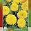 Thumbnail: Girasol Enano Con Flores Dobles Sungold