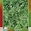 Thumbnail: Alfalfa