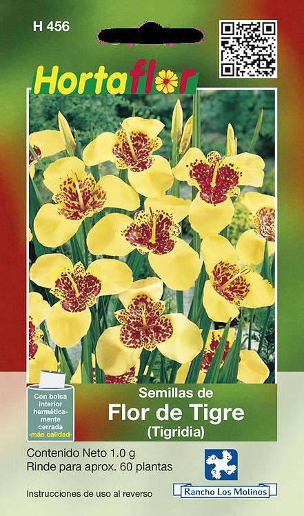 Flor De Tigre Tigridia