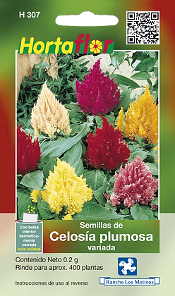 Celosia Plumosa Variada