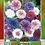 Thumbnail: Pincel Centaurea Variada