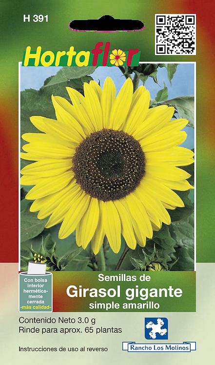 Girasol Gigante Amarillo Sunflower