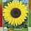 Thumbnail: Girasol Gigante Amarillo Sunflower