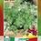 Thumbnail: Cilantro Cultivado