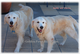 Buddy and Charlee - 5-8-2020.png