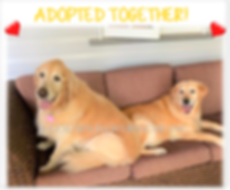 Millie and Honey's Adoption Post 27-3-19