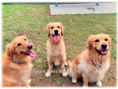 Holly's Play Date 1-8-2020.png