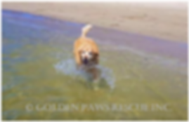 Tommy at the Beach 6-10-2019.png