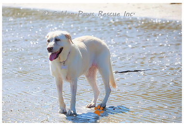 Daisy at the Beach 19-1-2021 (5).png