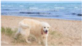 Abbie at the Beach Thu 12-12-2019.png