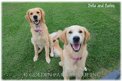 Bella and Bailey 21-2-2020 (3).png