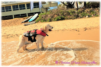 Mias Paddle Boarding Adventure 3 26-1-20