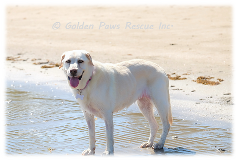 Daisy at the Beach 19-1-2021 (1).png
