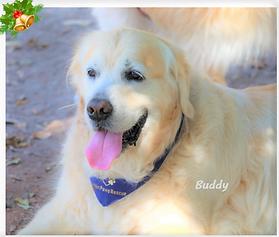 Buddy 6-12-2020.png