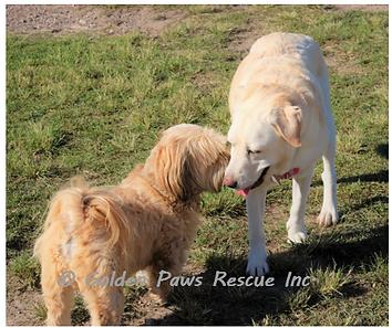 Daisy at Doggie Park Sun 6-6-21 (1).png