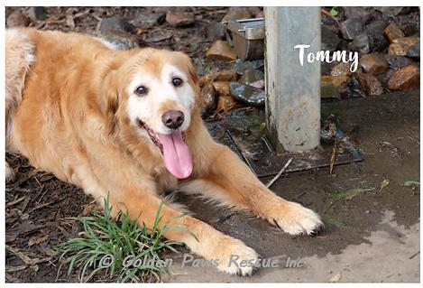 Tommy Sat 27-2-21.png