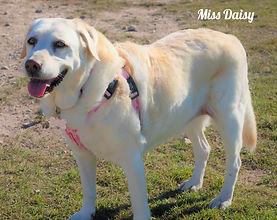 12 - DECEMBER - Miss Daisy.jpg