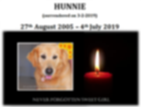 Remembering Hunnie 4-7-2019.png