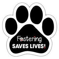 fostering saves lives.jpg