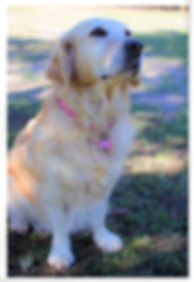 Mollys Profile Photos 30-5-19 (4).png