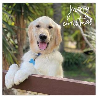 2021 Christmas Card - Bernie.jpg