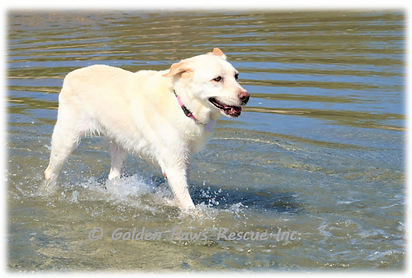 Daisy at the Beach 19-1-2021 (2).png