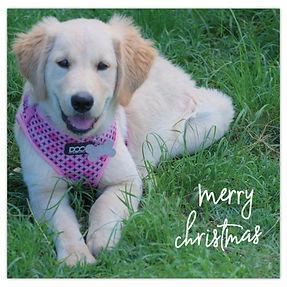 2021 Christmas Card - Dixie.jpg