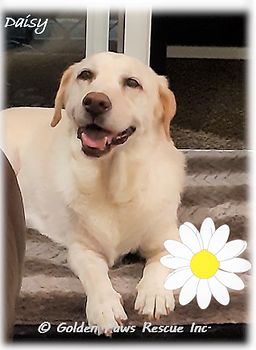 Daisy on Mon 15-2-2021.png